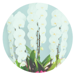 花の通信販売からご葬儀、社葬を総合プロデュース 花の長谷川商店(ハセガワフローリスト) 法人のお客様